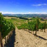 Винодельня Де Стефанелли: мечта становится реальностью