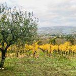 Винодельня Тенута Пепе в сердце Ирпинии