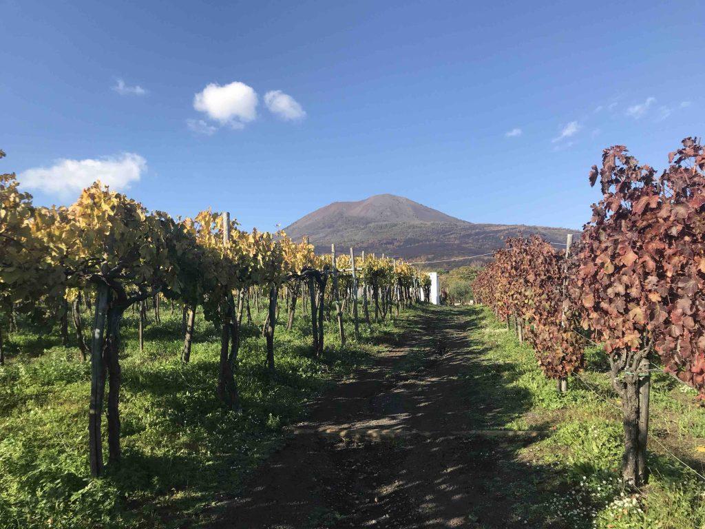 виноградники у подножия Везувия