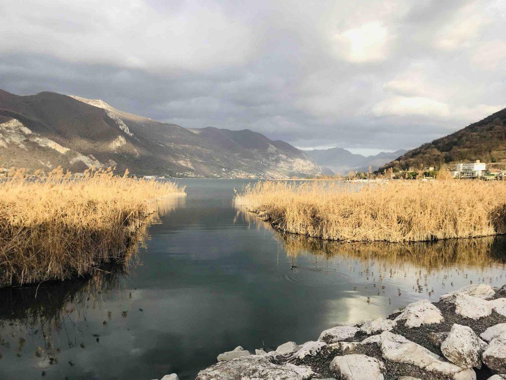 Вид на озеро Изео. Камыши