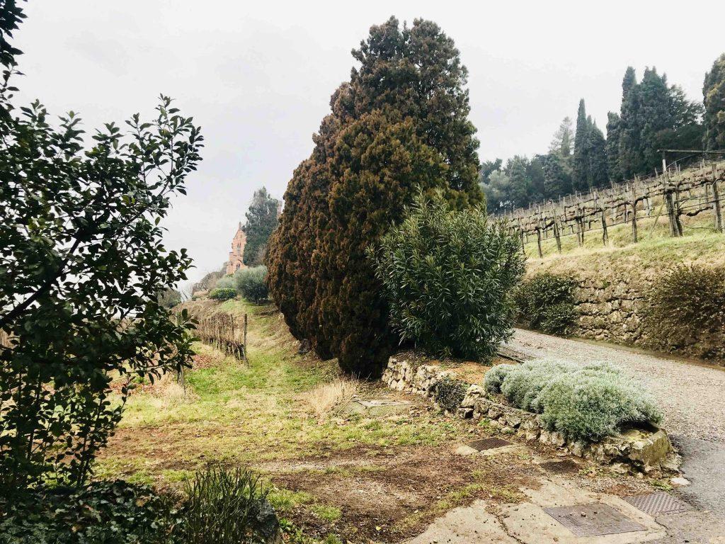 Виноградники винодельни Бономи